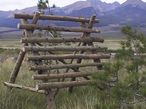 Aspen buck fencing as snow fence built by greenleaf forestry craftsmen